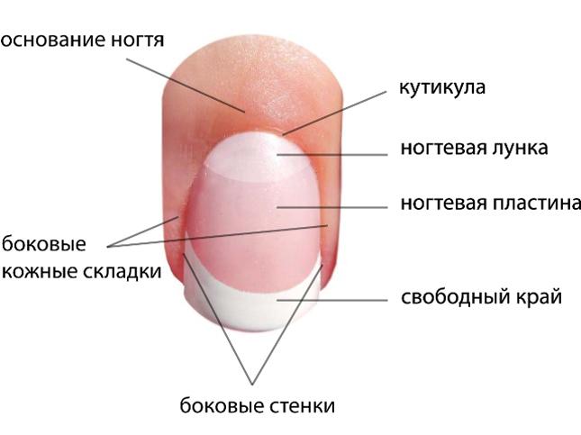 хруст в коленных суставах народные средства лечения